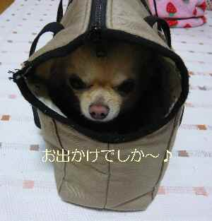 blog2009030705.jpg