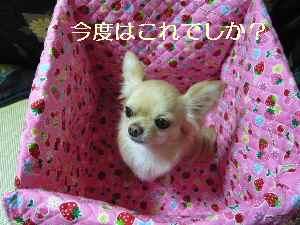 blog2009031005.jpg