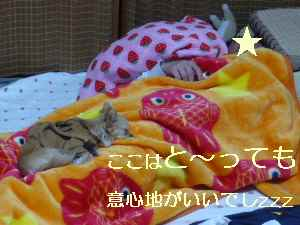 blog20090312.jpg