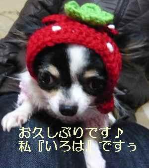 blog2009031401.jpg