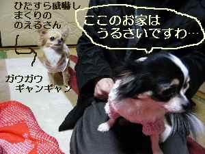 blog2009031403.jpg
