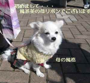 blog2009031501.jpg