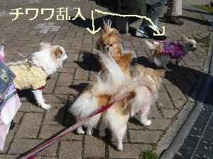 blog2009031503.jpg