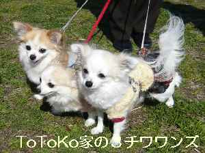 blog2009031504.jpg