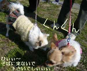 blog2009031512.jpg