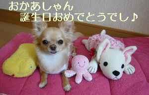 blog2009031701.jpg