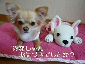 blog2009031801.jpg