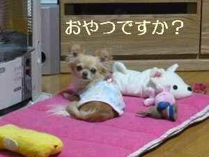 blog2009032506.jpg