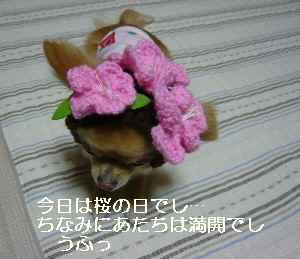 blog2009032701.jpg