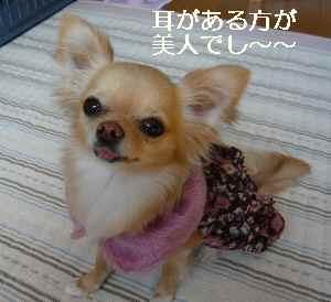 blog20090331.jpg