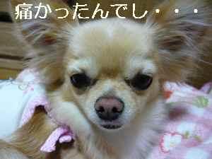 blog2009040901.jpg