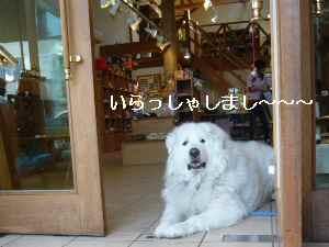 blog2009041104.jpg