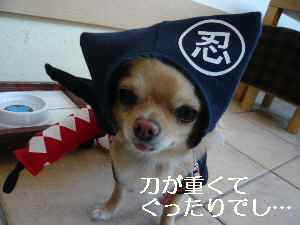 blog2009041110.jpg