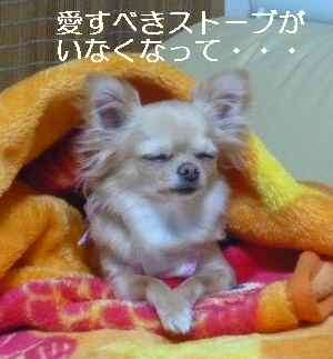 blog2009041306.jpg