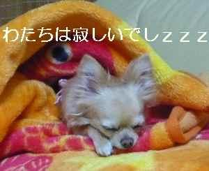 blog2009041307.jpg
