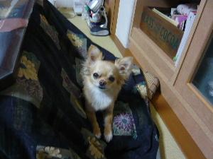 blog2009041401.jpg