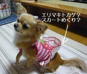 blog20090417.jpg