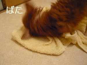 blog2009041807.jpg