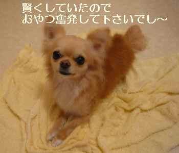 blog2009041808.jpg