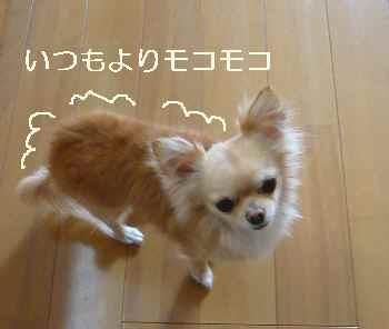 blog2009041809.jpg