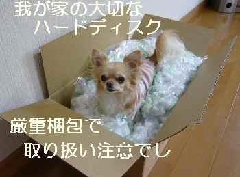 blog2009041901.jpg