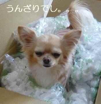 blog2009041902.jpg