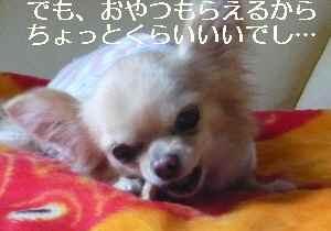 blog2009041903.jpg