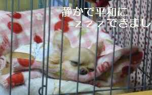 blog2009042001.jpg