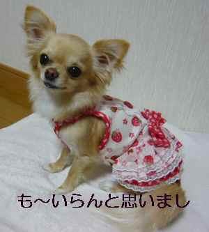 blog2009042203.jpg
