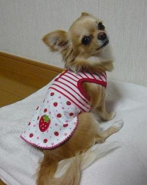 blog2009042204.jpg
