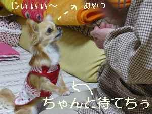 blog2009042302.jpg