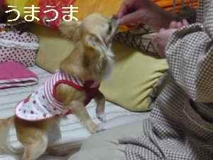 blog2009042303.jpg