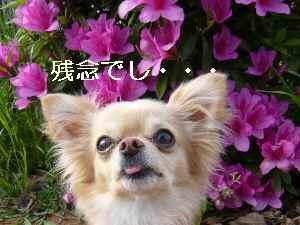 blog2009042403.jpg