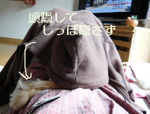 blog2009042601.jpg