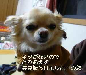 blog20090427.jpg