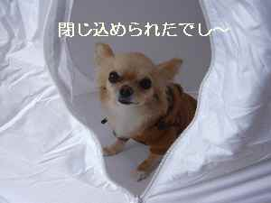 blog2009042802.jpg