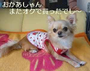 blog2009050203.jpg