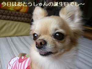blog2009050303.jpg