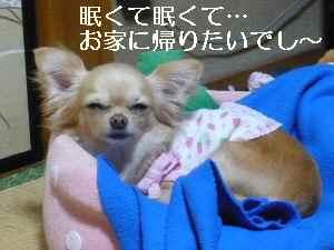 blog2009050602.jpg