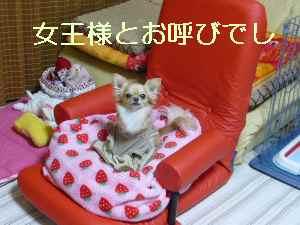 blog2009050901.jpg