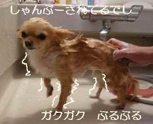 blog2009051007.jpg