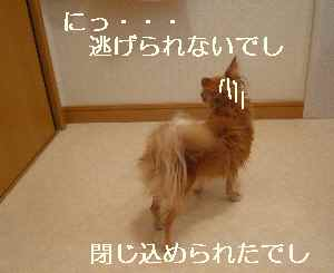 blog2009051008.jpg