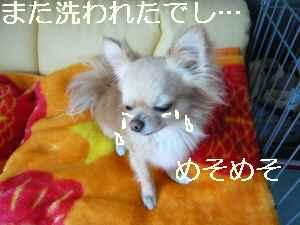 blog2009051009.jpg