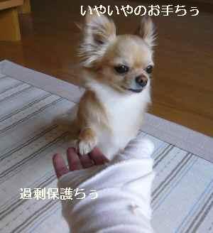 blog2009051403.jpg