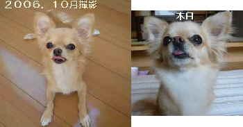 blog2009051408.jpg