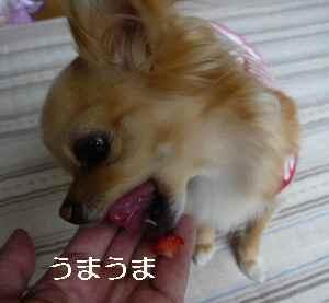 blog2009051902.jpg
