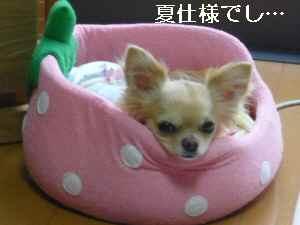 blog2009052107.jpg