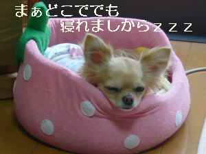 blog2009052108.jpg