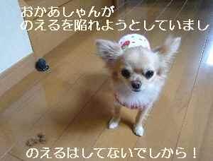 blog2009052503.jpg
