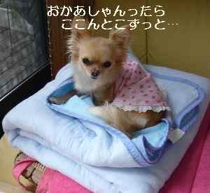 blog2009052704.jpg
